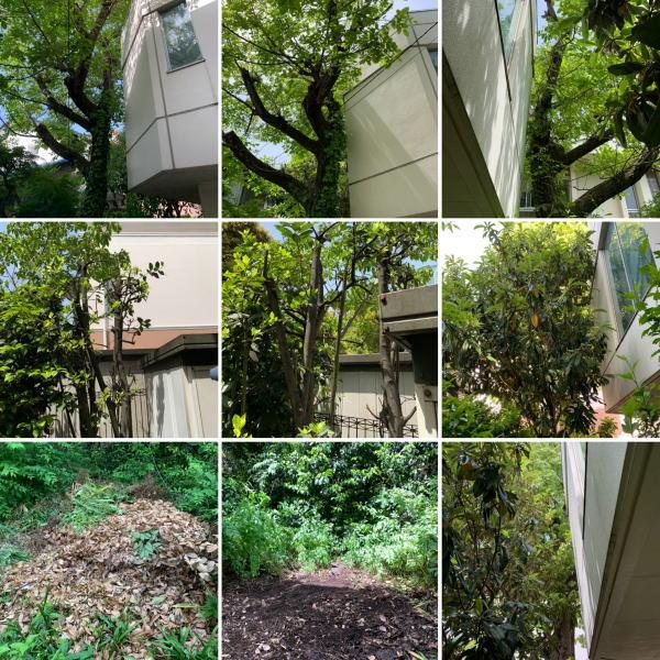 施設内建物に隣接している植木の枝おろしと境界側の植木の枝おろし作業
