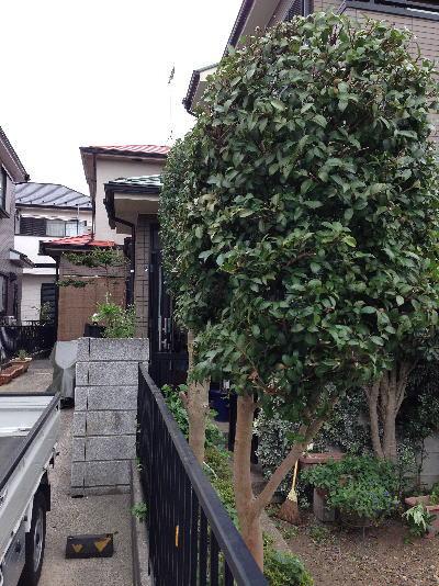 お隣さんとの境界側の植木/庭木剪定