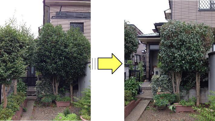 植木/庭木全体のお手入れはもちろん、植木/庭木1本でも依頼にご対応