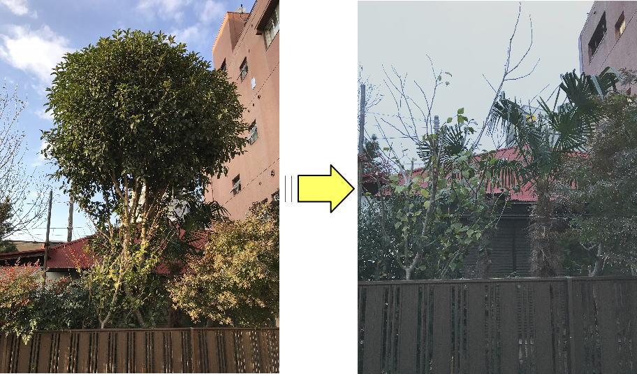 大きくなりすぎ手に負えなくなった植木/庭木を根元から伐採