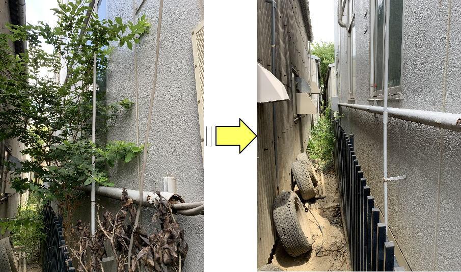 建物隙間で育つ雑木伐採作業