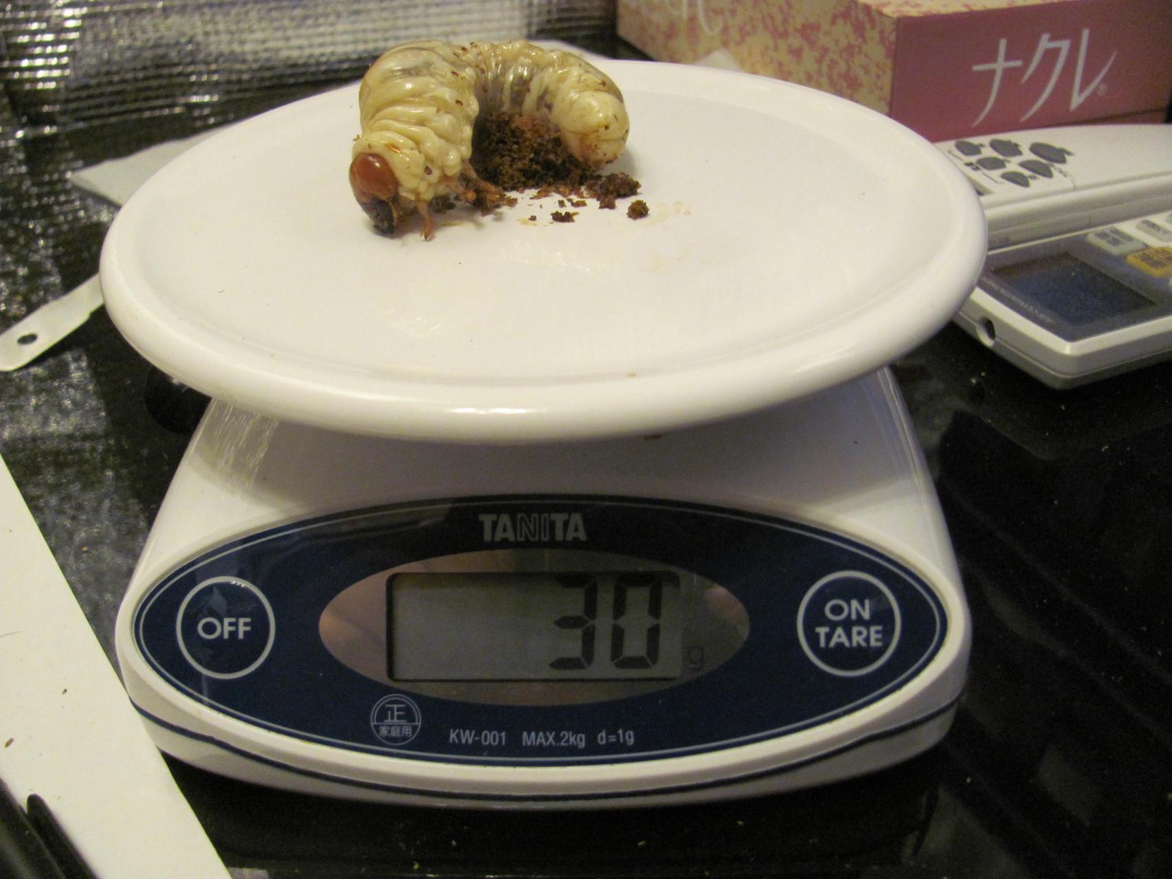 31gと30gを行ったり来たりですのでお腹の真ん中に挟まっていた食いカスは許してね。