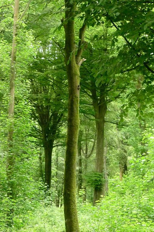 forêt de chênes et de hêtres, naturopathie, Moulin de Grouches, PranaHvital