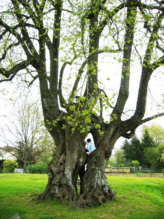 arbre des épousailles, naturopathie, Moulin de Grouches, PranaHvital