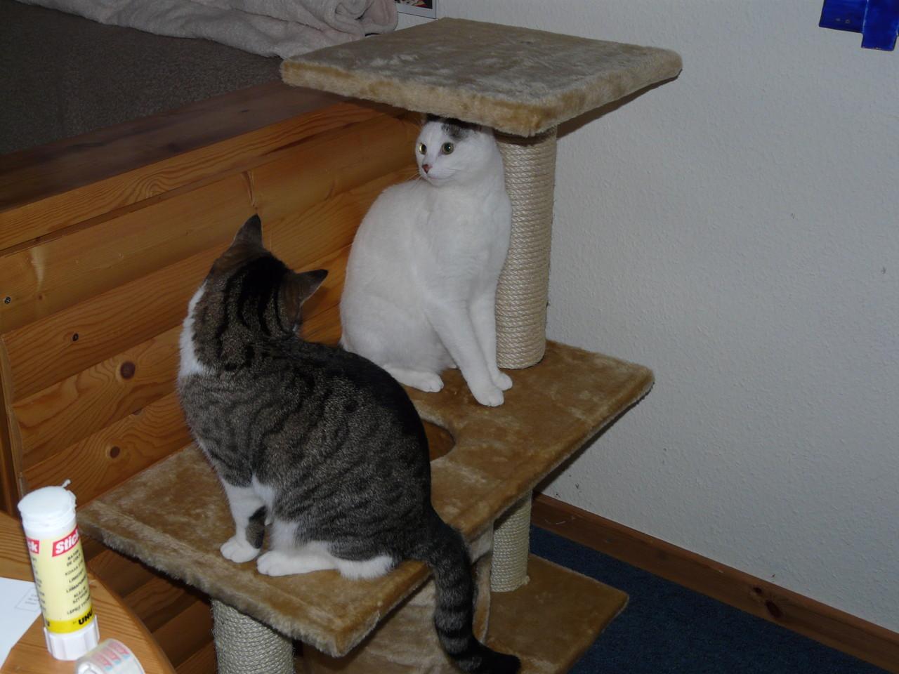 Sophie und Kira im Spiel