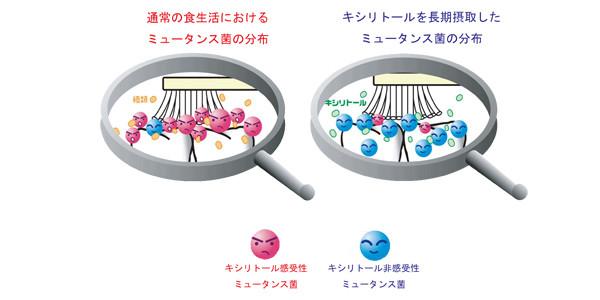 キシリトールを長期摂取したミュータンス菌の分布