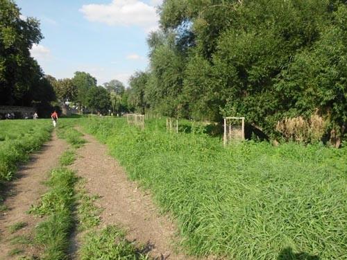 Aufnahme der zehn  im Frühjahr 2013 gepflanzten und eingehausten Schwarzpappeln vom Sommer 2013