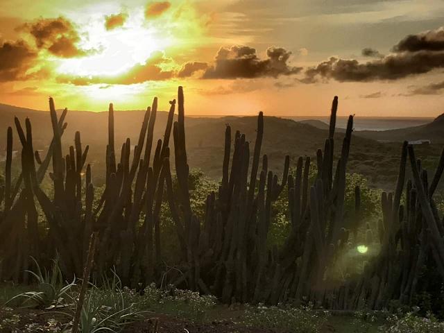 Shelterrock-Paradise-sundown-urlaub-curacao-villa-ferienhaus-pool-karibik