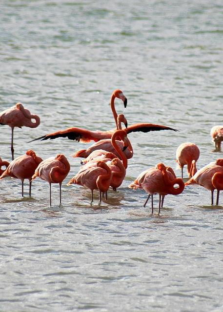 flamingo-urlaub-curacao-ferienhaus-pool