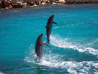 Delfine-urlaub-curacao-ferienhaus-pool-karibik