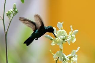 Kolibri-Curacao-Urlaub-Ferienhaus