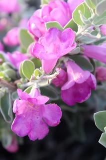 Blüte urlaub curacao cas bon bini