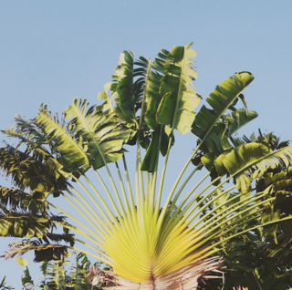Palme - Urlaub auf Curacao