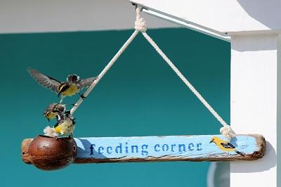 Vogelfütterung-Urlaub-Curacao-Ferienhaus-Karibik-Villapark-Fontein