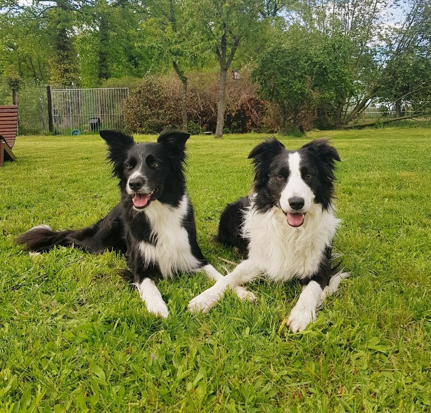 Lyka und Moss