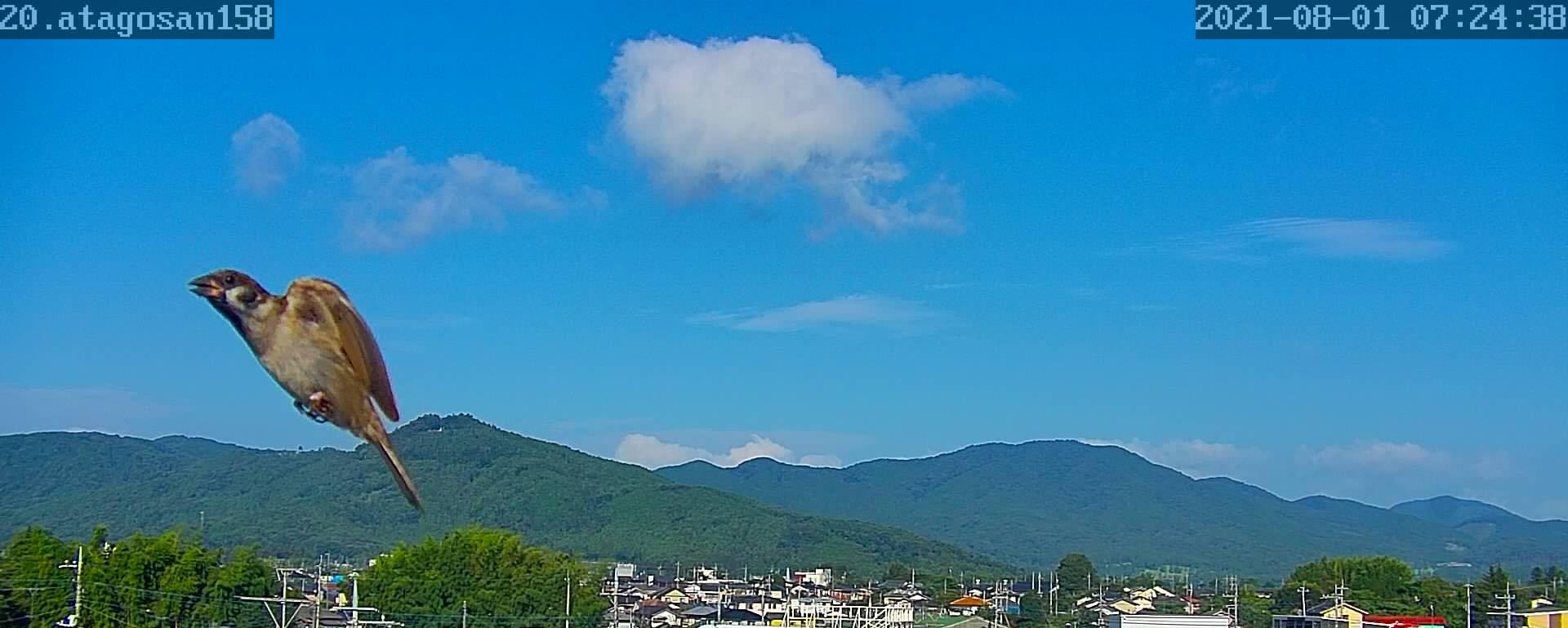 8月1日  また、暑くなってきた。 86日目