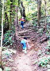 そこから急勾配な道を登っていきます。