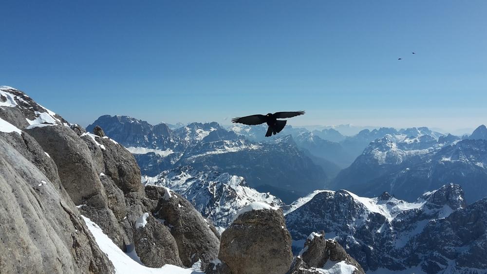 Rundblick vom Gipfel der Marmolada, hier mit Vogel