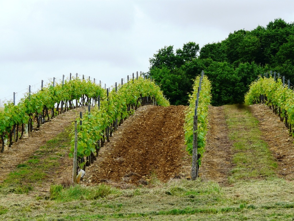 Vignoble des Borderies