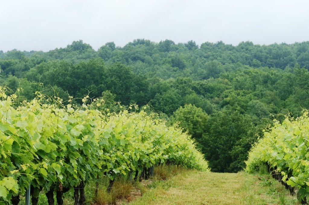 Vignes et bois...