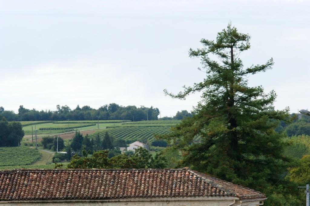 L'arbre de Goulebenèze à Peuillet