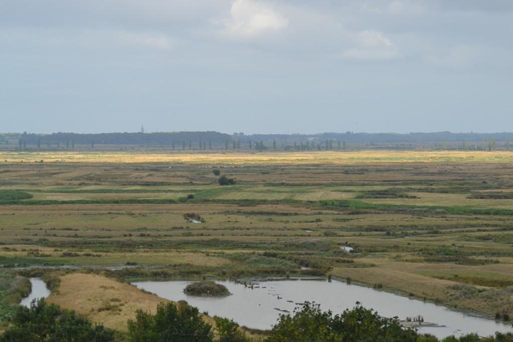 Le marais de Brouage