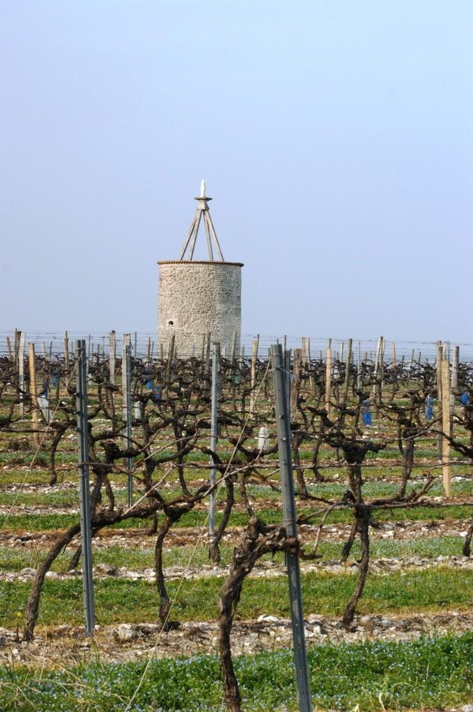 Vignoble et moulin de Grande Champagne