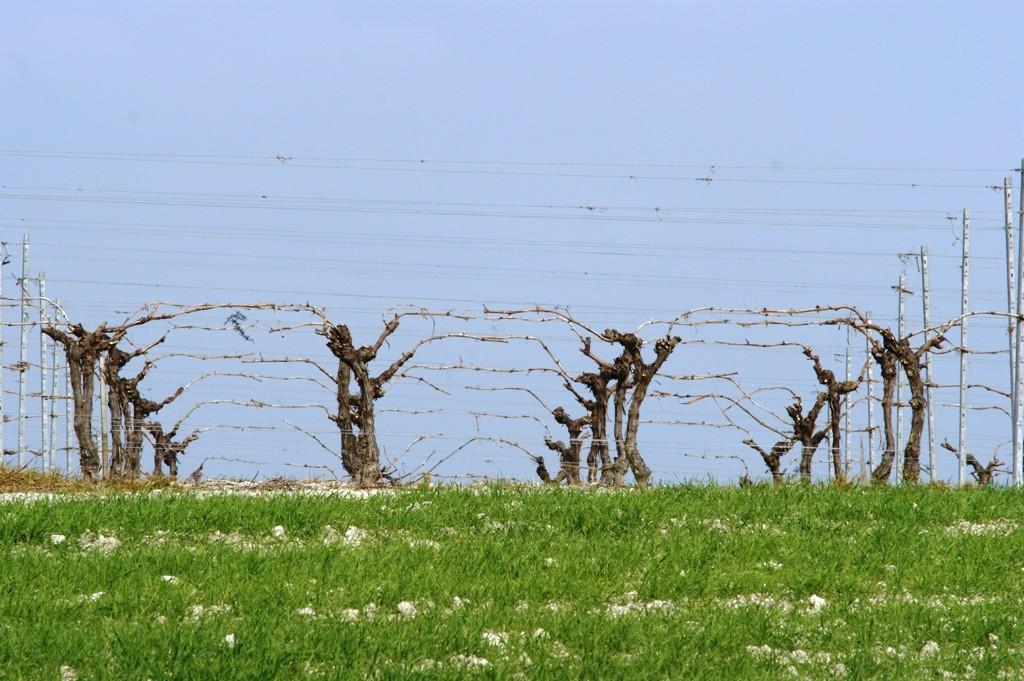 Vignoble de Grande Champagne