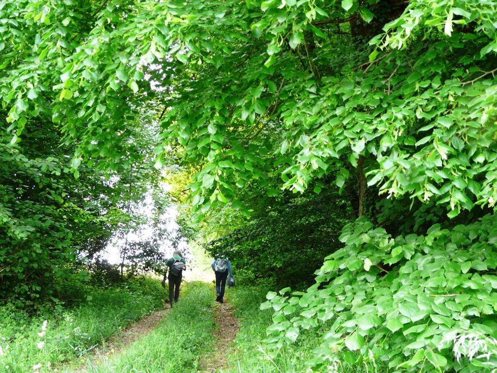 Sur le chemin de Montbergère