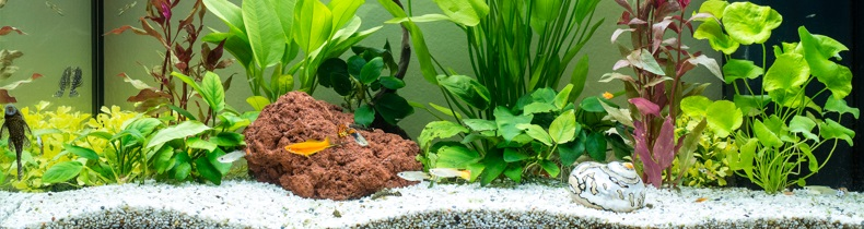Aquarium in den Praxisräumlichkeiten