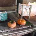 石蔵と次郎柿