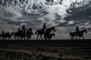 競走馬の画像