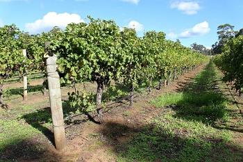 Australia オーストラリアのワイナリー