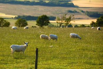 スコットランド・エルギンの農場画像