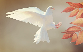 止まり木と鳥の画像