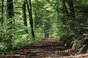 オークの森の画像