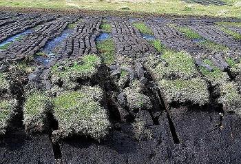 泥炭の画像