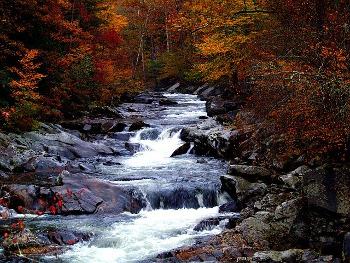 Smoky Mountains テネシー州スモーキー山脈の自然