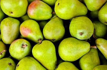 Pear 洋梨