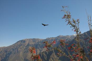 Cordillera de los Andes アンデス山脈