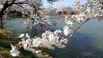 福島県郡山市にある五百渕公園の画像