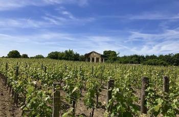 Winery フランスのワイナリー