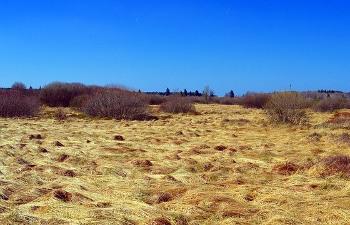 ピートのできる泥炭湿原