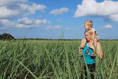 sugar cane サトウキビ