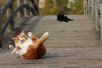 猫の画像2