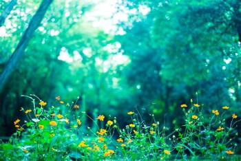 森林の画像