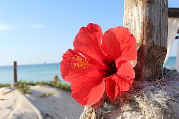 明るい花の画像