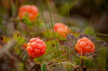 cloudberry クラウドベリー