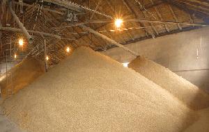 工場の製麦画像