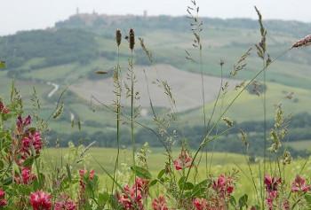 Toscana トスカーナ地方